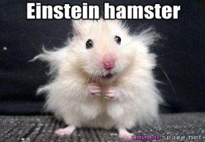 einstein-hamster