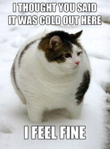funny-picture-cat-fat-not-cold