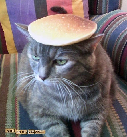Can Cats Eat Pancakes