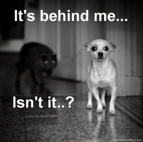 190438d1391007579-random-humor-cat-meme-scary-black-cat-dog-meme-funny-animals-funny-pictures