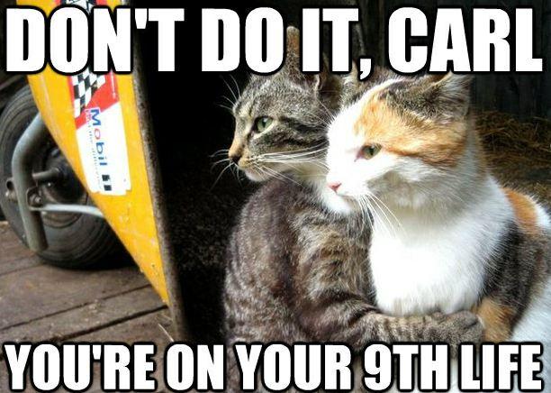 Restraining-Cats