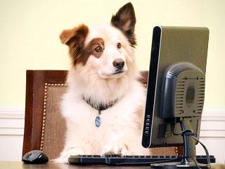 dog-blog_320x240