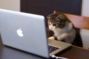 Computer-Cat
