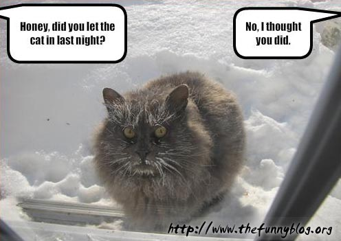 funny-cat-in-snow-honey-let-in-night
