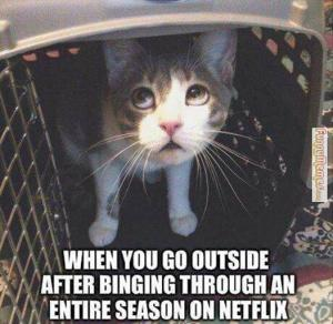 Cat-memes-when-you-go-outside-after-netflix