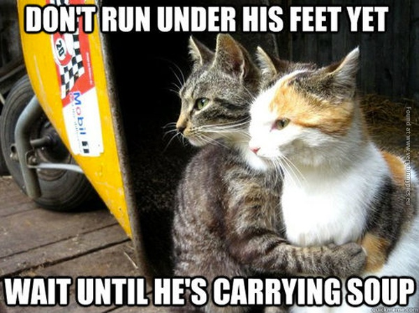 funny-cat-pictures-dont-run-under-his-feet-yet