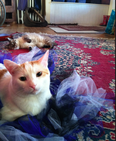 Why yes, I am wearing a tutu. It compliments my eyes. And yes, that is a furball photobomb in the background.