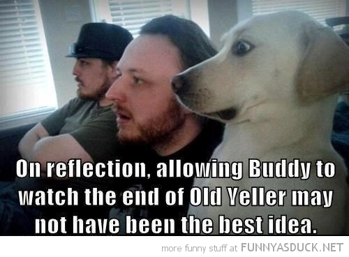 funny-dog-watching-tv-shocked-old-yeller-pics-1