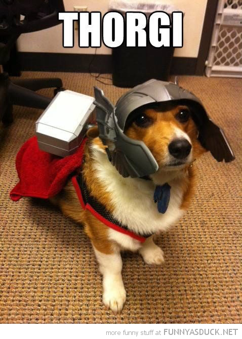 funny-dog-dressed-up-costume-corgi-thorgi-pics