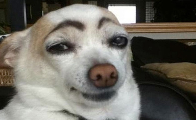 dogs-with-eyebrows-3A
