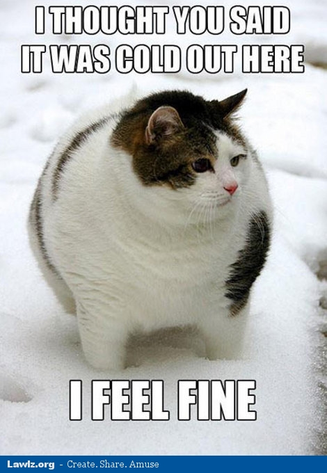 fat-cat-meme-thought-you-said-it-was-cold-i-feel-fine