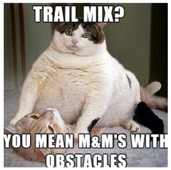Funny-Fat-cat
