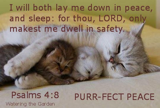 good-night-kitties