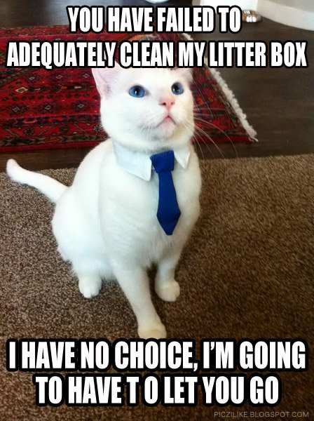 business-cat-meme-clean-litter-box-2.jpg