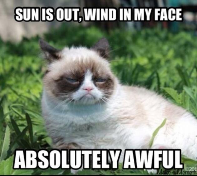 3-11-grumpy-cat-in-sun-Facebook-630x565.png