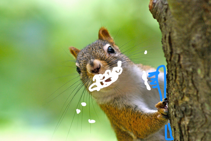 Squirrel_Tree_Happy.png