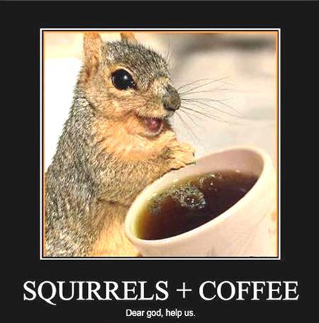 SquirrelsOnCaffeine.85268.jpg