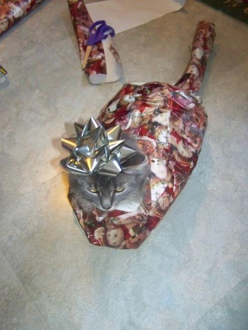 cat-wrap