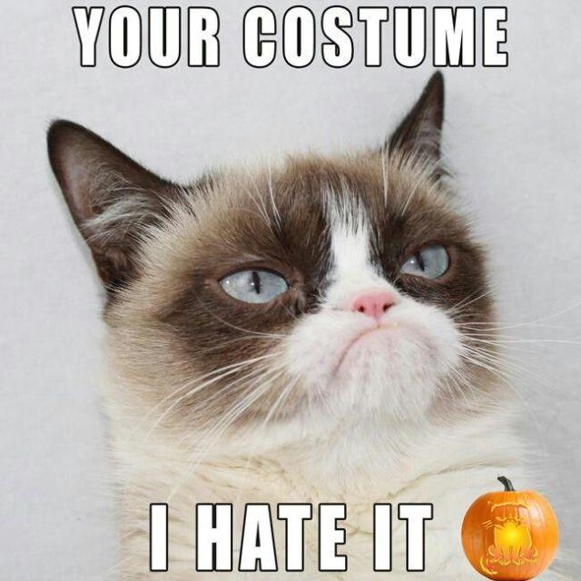 143e139b3f6fba5ebe5c463c9a050ac3--grumpy-cat-meme-grumpy-kitty-1.jpg