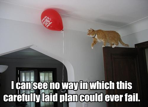 funny-pictures-cat-does-not-think-plan-will-fail.jpg