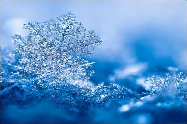 snowflakes23.jpg